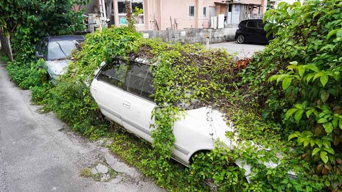 green-dealerships-abandoned-car